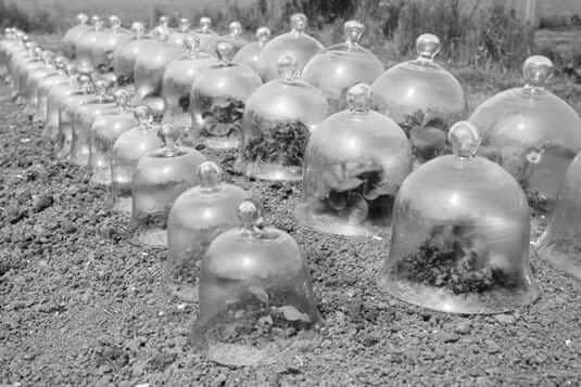 Glass Bell Jars - Cloche image